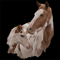 Wholesale Country Horse Graphic T Shirts Discount for Men Women Suppliers Distributors - 22156HD2