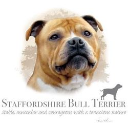 Bulk T-Shirts Wholesale Supplier Dog STAFFORDSHIRE BULL TERRIER