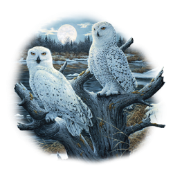 Animal Wildlife T Shirts Wholesale Owl T Shirts - MSC Distributors