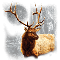 Animal Wildlife T Shirts Wholesale Elk T Shirts - MSC Distributors