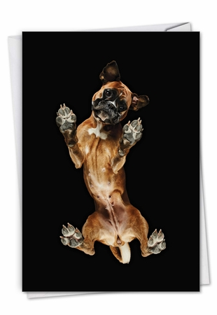 Stylish Miss You Card From NobleWorksInc.com - Big Under Dogs - Boxer