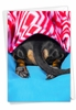 Humorous Miss You Card From NobleWorksInc.com - Tattle Tails - Blanket