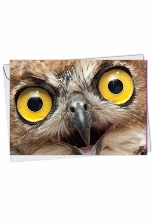 Artful Blank Card From NobleWorksInc.com - What A Hoot