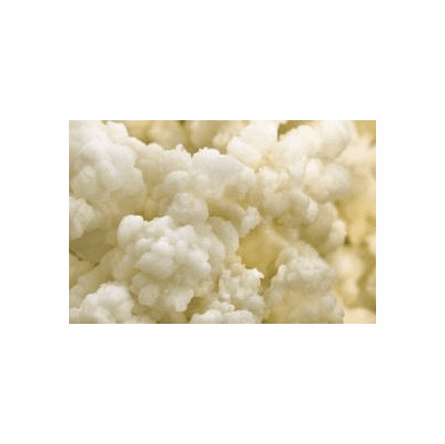 Real Kefir Grains - Organic Grown Dairy Kefir
