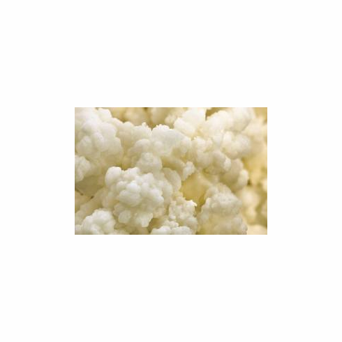 Real Kefir Grains Live Starter, Organic Grown Dairy Kefir