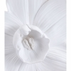 Orchid Medium Wall Decor in White
