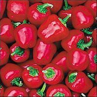Baby Red Pepper - 20 Seeds - Miniature Bell