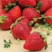 Ozark Beauty Everbearer Strawberry Plants