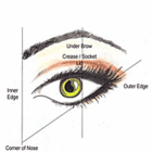 BASIC EYE APPLICATION GUIDE