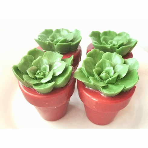 10 Succulent Plant Soap Favors