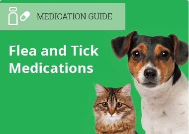 Flea & Tick Medication Guide