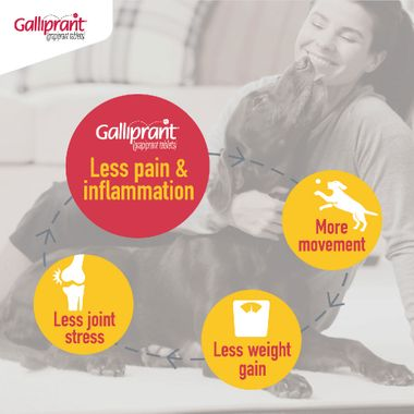Galliprant Tablets Free Shipping Entirelypets Pharmacy