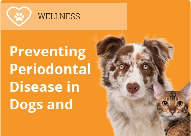 Preventing Periodontal Disease in Dogs and Cats