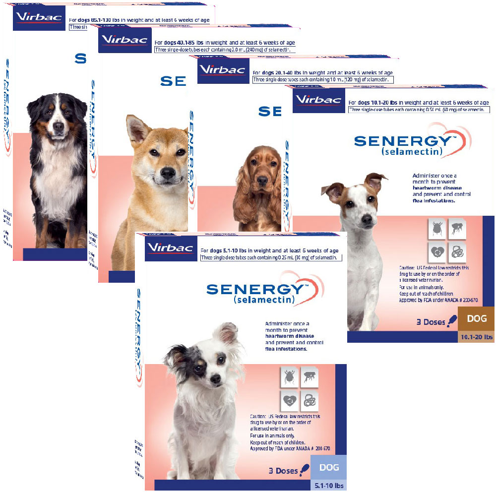 Senergy (selamectin) Topical Parasiticide for Dogs & Cats