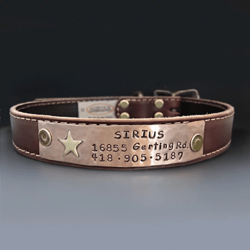 Personalized Gold Star Leather Dog Collar