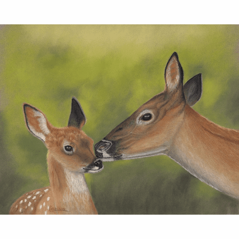 Doe and Fawn Numbered Art Print