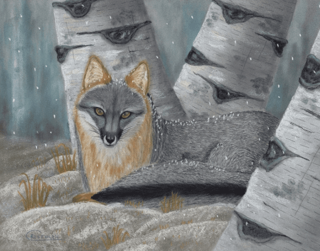 Gray Fox on Snowy Evening