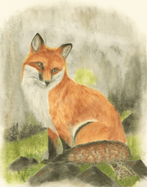 Red Fox and Toad