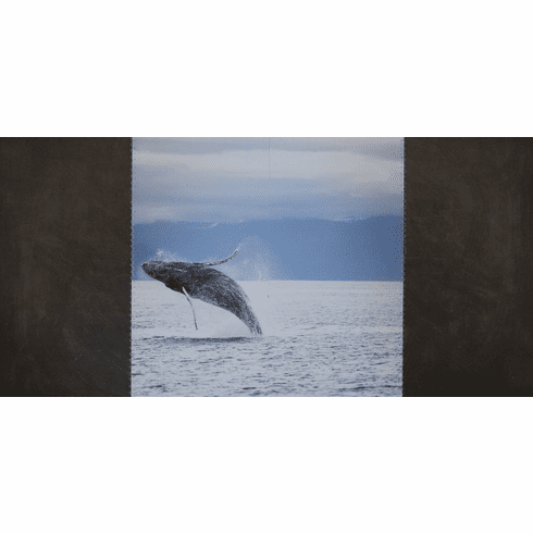 Stitched Whale Watching