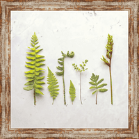 3D Ferns I Canvas Art