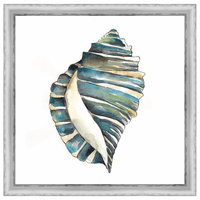 Aquarelle Shells I Framed Print