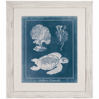 Azure Sea Turtle Study I Framed Print