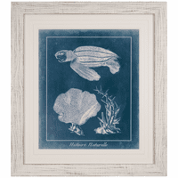 Azure Sea Turtle Study II Framed Print