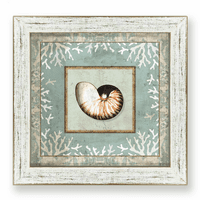Beachcomber Nautilus Shell Framed Art
