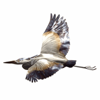 Blue Heron Flying Wall Art