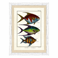 Fish Specimen I Wall Art