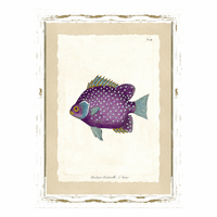 Fish Specimen III Wall Art