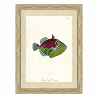 Fish Specimen IV Wall Art