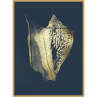 Golden Shell II Framed Print