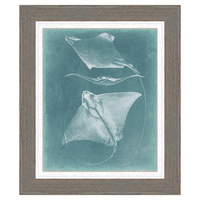 Morning Swim II Framed Print