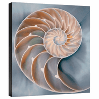 Nautilus in Blue II Gallery Wrapped Canvas