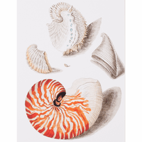 Neptune Shells I Canvas Art