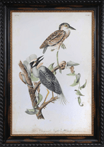 Night Heron Framed Art