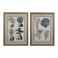 Oversized Coral Species Prints - Set of 2