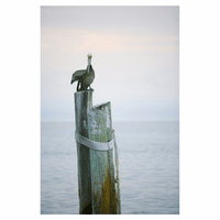 Padre Island Pelican Canvas Art