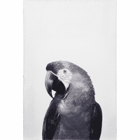 Patty Parrot Canvas Wall Art