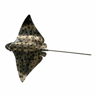 Polished Metal Eagle Ray - Medium