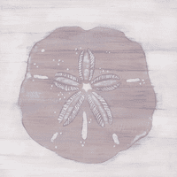 Sand Dollar Driftwood Silhouette Canvas Art