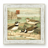 Sandpiper I Framed Art