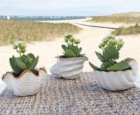 Seaside Shells Planters - Set of 3
