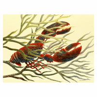 Seaweed for Dinner Lobster Canvas Art