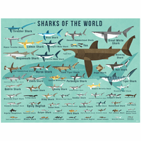 Sharks of the World Canvas Wall Art