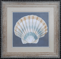 Shell On Slate III Framed Art