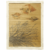 Shells and Coral on Bamboo Framed Wall Art