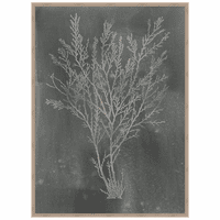 Silver Foil Algae I on Black Framed Print