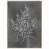 Silver Foil Algae III on Black Framed Print